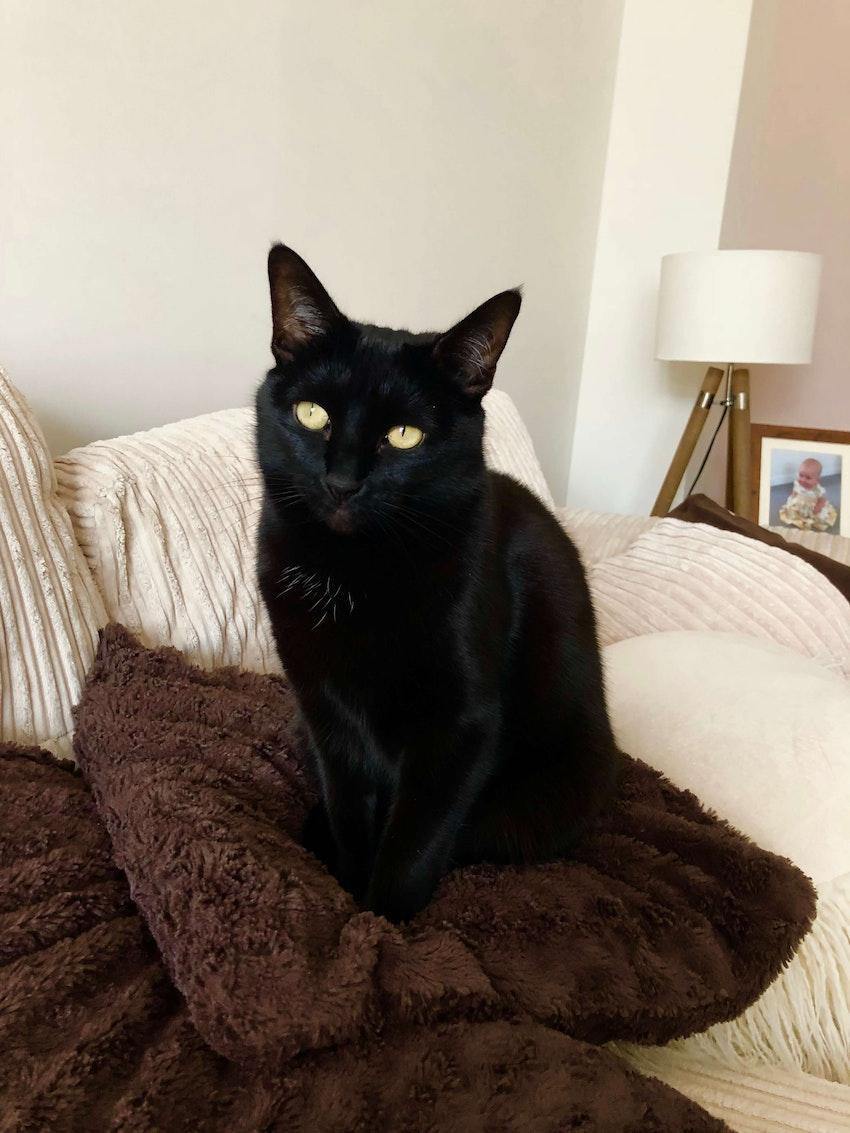 Dora, a black cat, looking magnificent