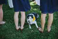 A border collie dog sits between bridesmaid's legs