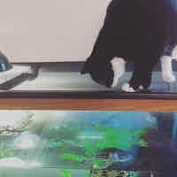 A cat stalks a turtle that is in a water tank