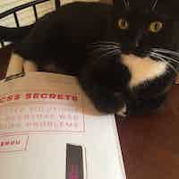 """A black and white cat sits on a book titled """"CSS Secrets"""", looking up at the camera"""