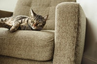 A mackerel tabby cat sits on a couch