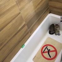 A mackerel tabby cat sits in a bathtub