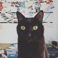 A black cat stares into the camera