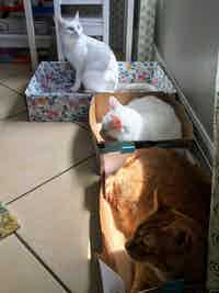 3 cats sat in their cat boxes with a tiny bit on sun covering a bit of two of the cats